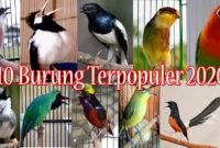 10-Burung-Terpopuler-2020