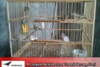 4-Langkah-Mudah-Cara-Ternak-Burung-Pleci