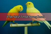 8-Tips-Sukses-Ternak-Burung-Kenari
