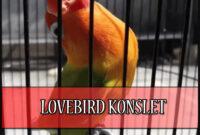 Cara-Agar-Lovebird-Konslet-di-Gantangan