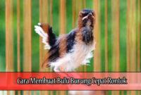 Cara-Membuat-Bulu-Burung-Cepat-Rontok