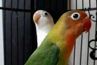 Lovebird-Paud