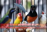 Manfaat-Bawang-Putih-Untuk-Burung-Kicau