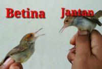 Membedakan-burung-jantan-dan-betina