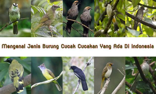Mengenal-Jenis-Burung-Cucak-Cucakan-Yang-Ada-Di-Indonesia