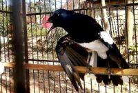 Penjemuran-Burung