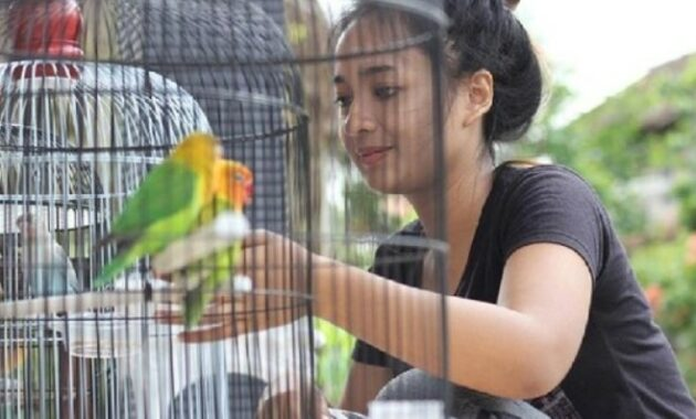 hobiis-wanita-lovebird