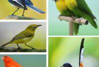 masteran-burung