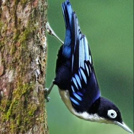 gambar-burung-rambatan