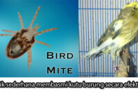 kutu-burung