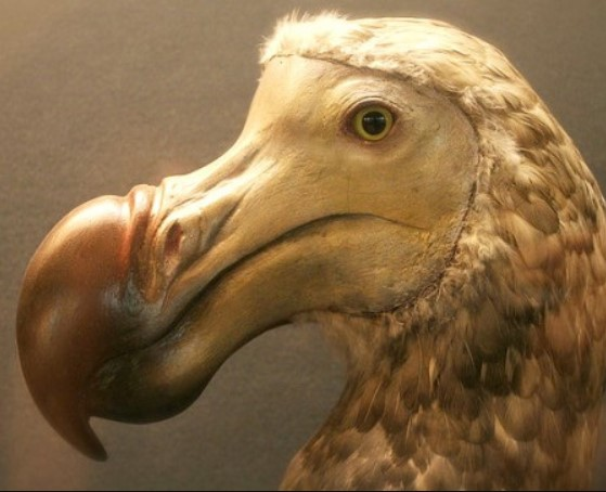 misteri-burung-dodo