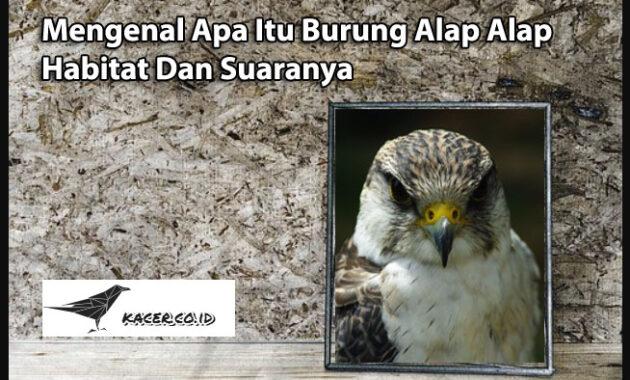 burung-alap-alap
