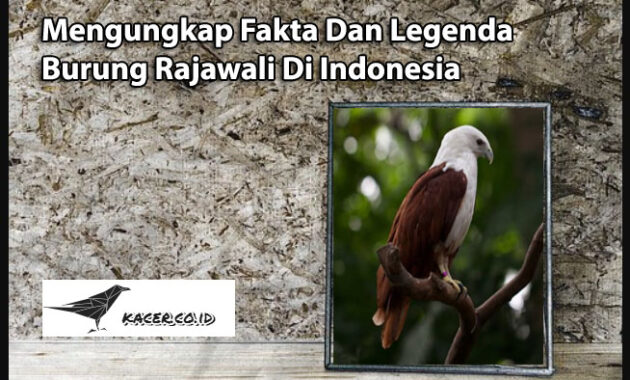 burung-rajawali