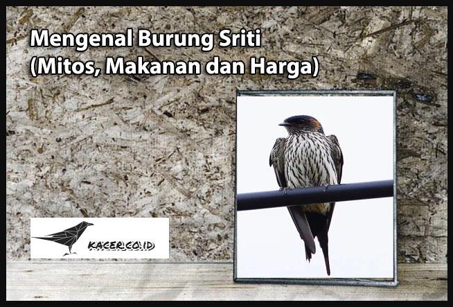 burung-sriti