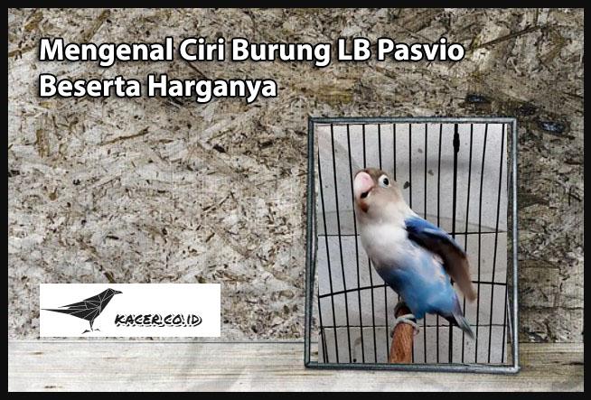 lb-pasvio