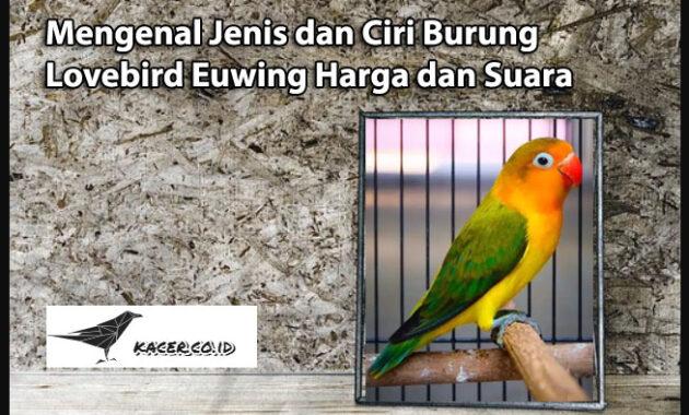 lovebird-euwing