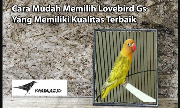 lovebird-gs