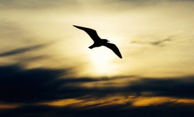mitos-burung-ababil