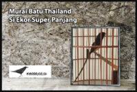 murai-batu-thailand