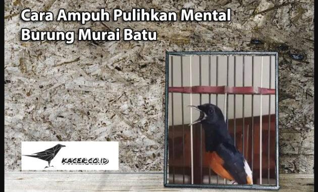 pulihkan-mental-burung-murai