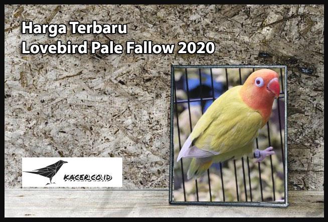 Harga Terbaru Lovebird Pale Fallow 2020 Ciri Dan Perawatan
