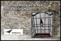 masteran-kacer