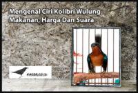 kolibri-wulung