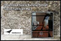 suara-burung-pentet