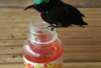 makanan-burung-kolibri