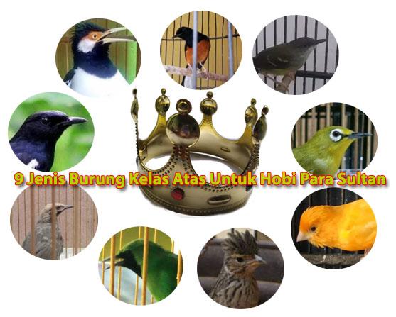 9 Jenis Burung Kelas Atas Untuk Hobi Para Sultan Di Indonesia