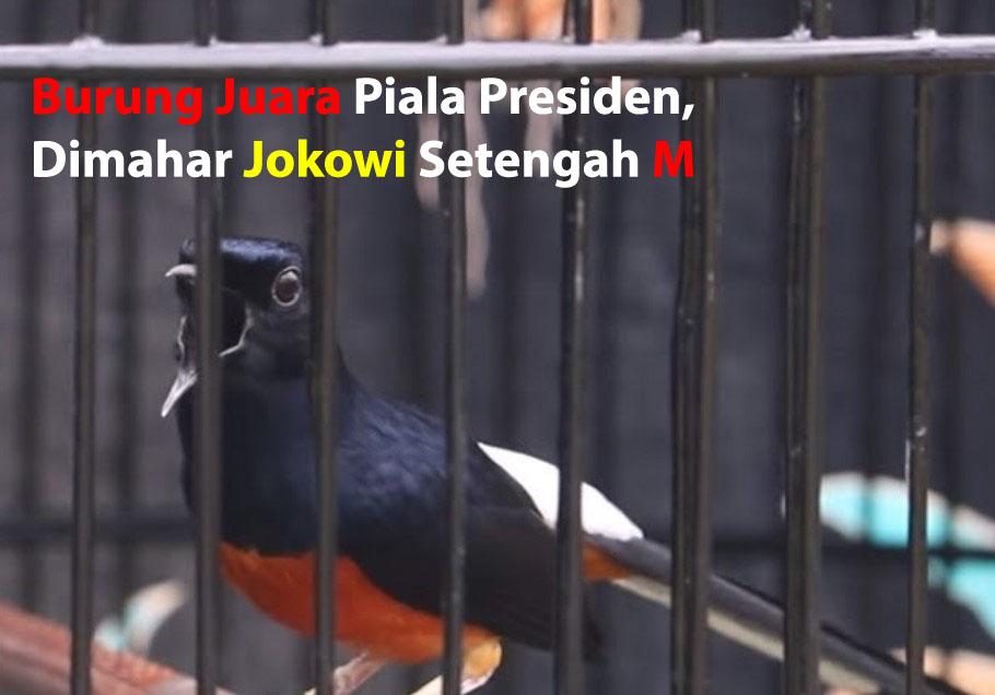 Inilah Burung Juara Piala Presiden Dimahar Jokowi Setengah M