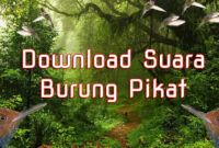 download-suara-burung-pikat