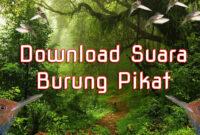 download-suara-burung-pikat