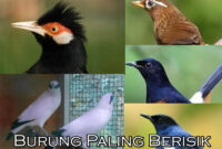 burung-paling-berisik
