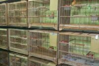 bisnis-burung-kenari
