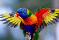 jenis-burung-indonesia
